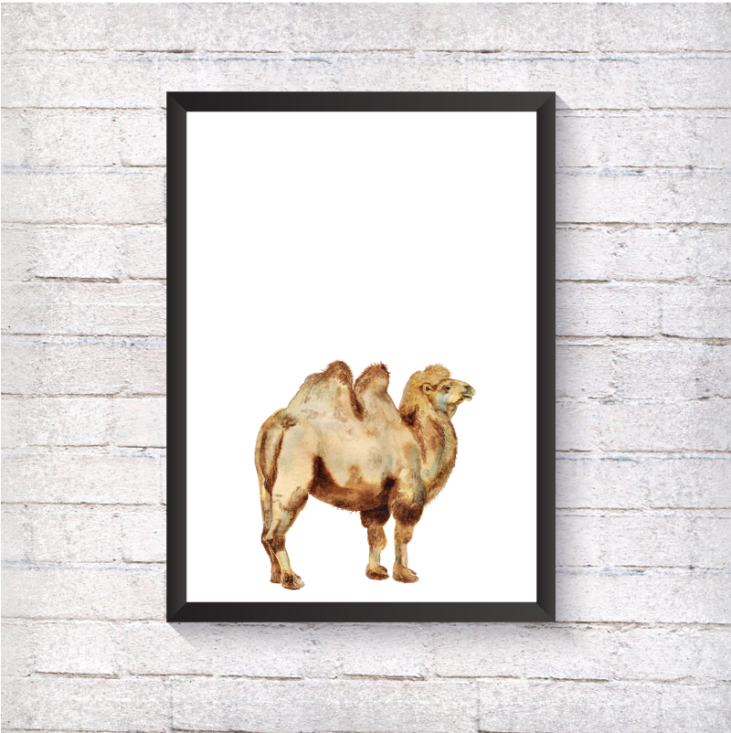 Watercolour Camel - Alotta Style - Interior Prints and Posters
