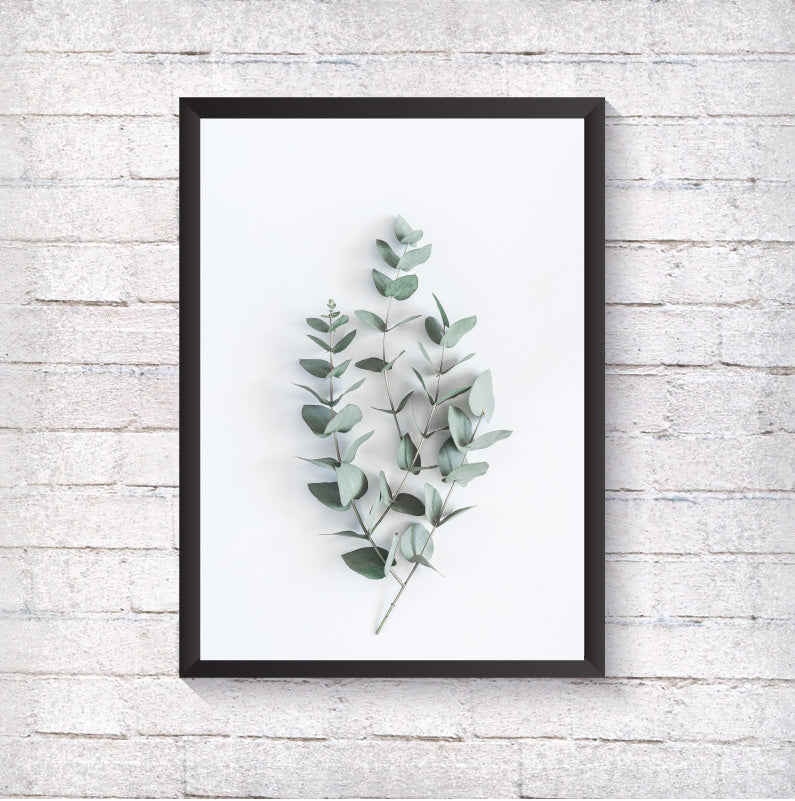 Eucalyptus Branches - Alotta Style - Interior Prints and Posters