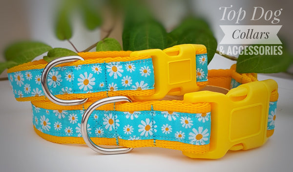 Blue Daisy woven ribbon Collars & Leads