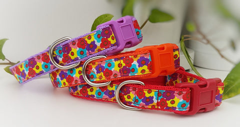 Blooms Dog Collars & Leads