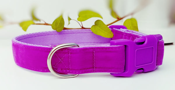 Lilac Velvet Dog Collar / Lead