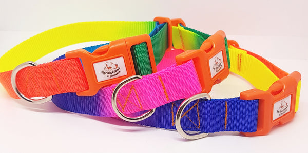 Rainbow webbing dog collars  & Leads