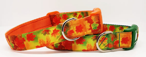 Autumn Leaves  Dog Collars & Leads
