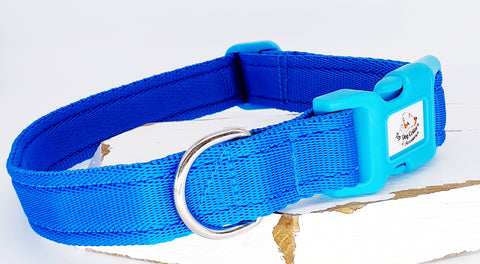 Turquoise Plain Webbing Collars & Leads