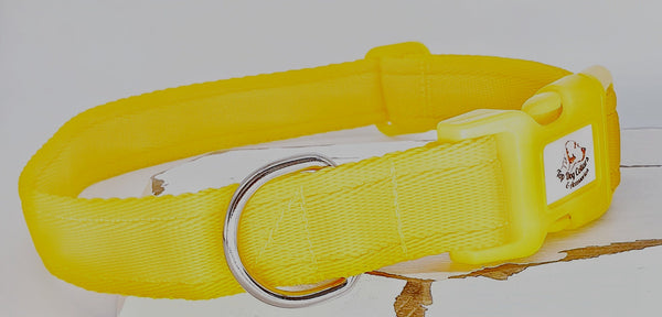 Yellow Plain Webbing Collars & Leads