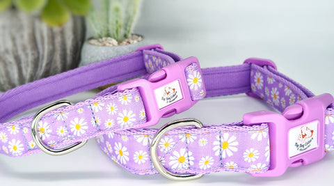 Lilac Daisy woven ribbon Collars & Leads