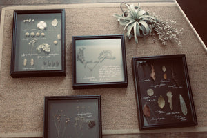 Framed Herbarium Set
