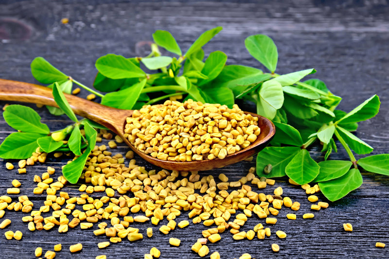 Fenugreek ~ Blood Sugar & Mucus Manager