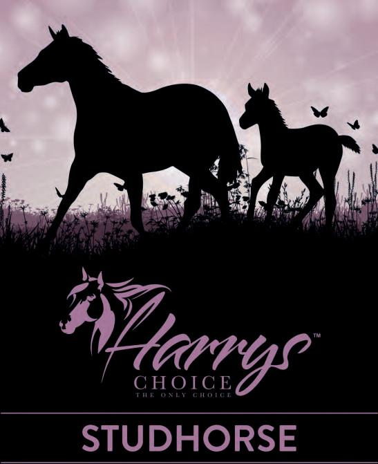 Harrys Choice Stud Horse