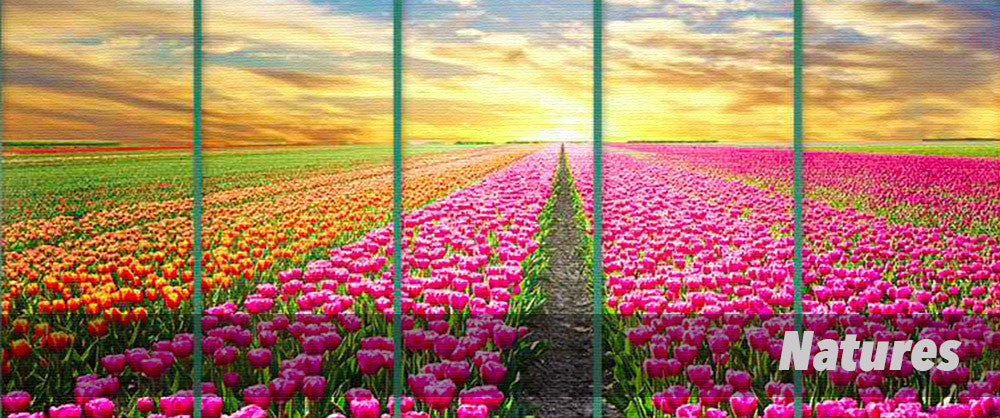 5 Panel Wall Art of Natures and Flower Field