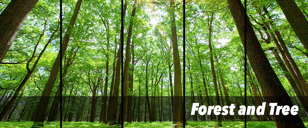 forest and tree canvas print wall art collection by panelwallart.com