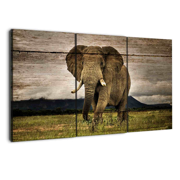 albyden art - animals elephants wall art canvas prints sold at panelwallart.com