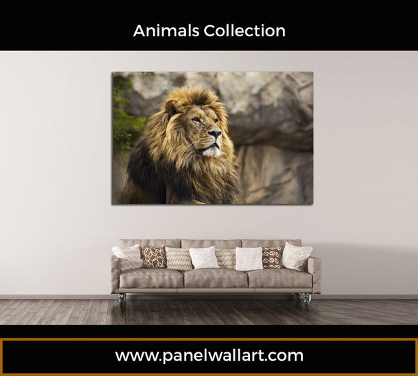 brown lion looking to the sky canvas wall art 1 piece