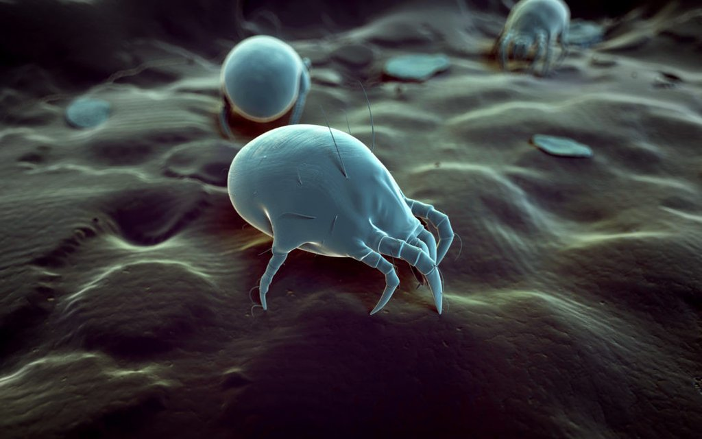How To Prevent Dust Mite Allergies This Fall