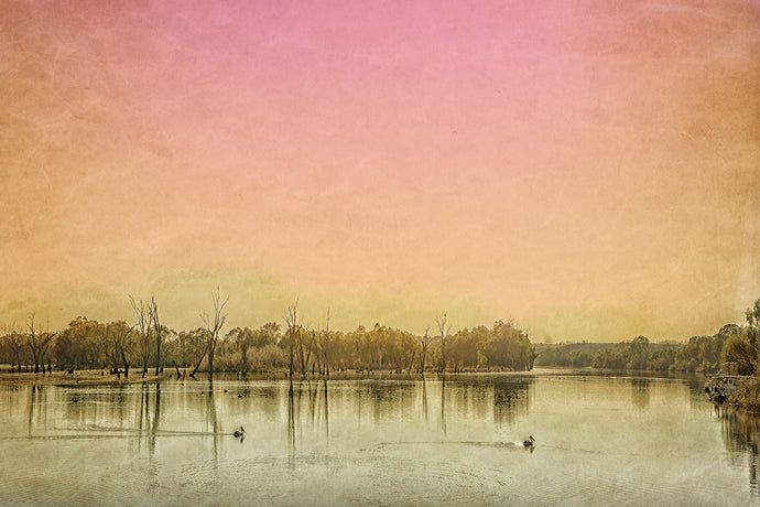 River Murray swans fine art print
