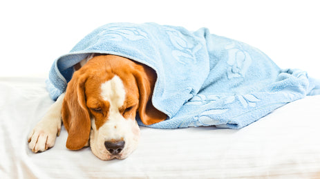 3 Common Winter Dog Diseases and their Home Remedies
