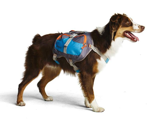 Tricks to Follow to Make Your Dog Wear A Backpack