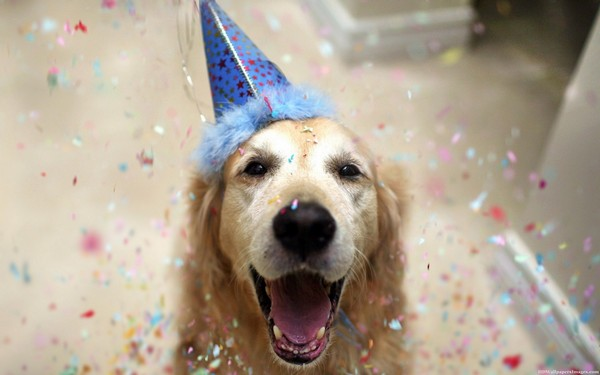 Fantastic Birthday Celebration Ideas for your Dog