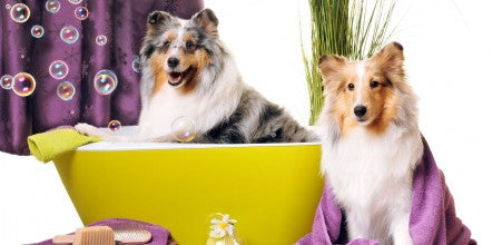 3 Most Useful Dog Care Mobile Apps for Every Pet Owners