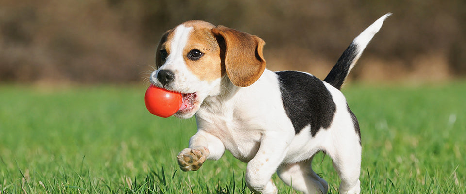 Want to Train your Puppy? Know the Things you must Avoid