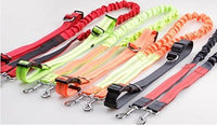 Stretch Running Dog Leash