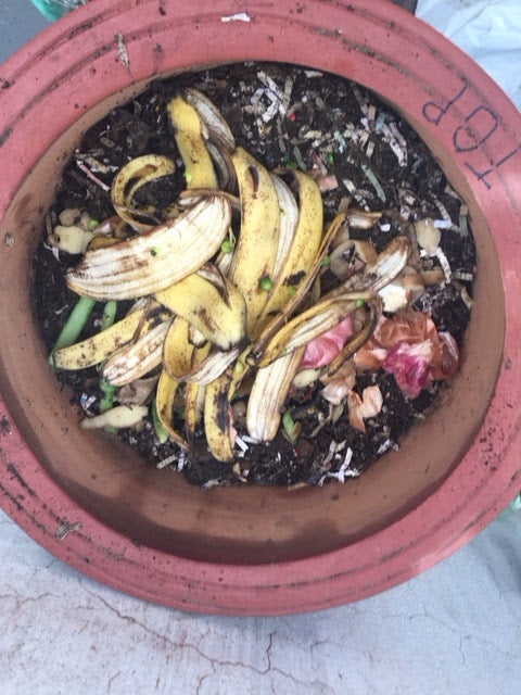 Composting: A guide from our experiences