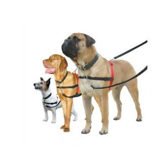 Halti Dog Harness from Company of Animals