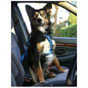 Softex Dog Car Safety Harness from Creature Comforts