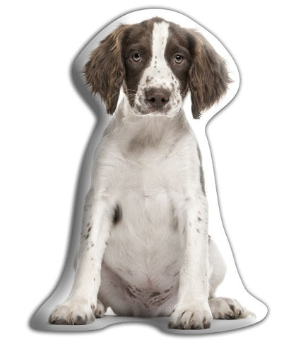 Springer Spaniel Adorable Cushion