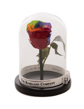 As seen in Beauty and the Beast: Rainbow Eternity Rose, Under the Dome