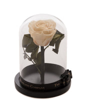 As seen in Beauty and the Beast: White Eternity Rose, Under the Dome