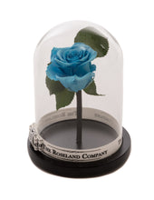 As seen in Beauty and the Beast: Light Blue Eternity Rose, Under the Dome