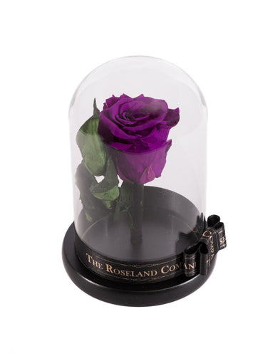 As seen in Beauty and the Beast: Purple Eternity Rose, Under the Dome
