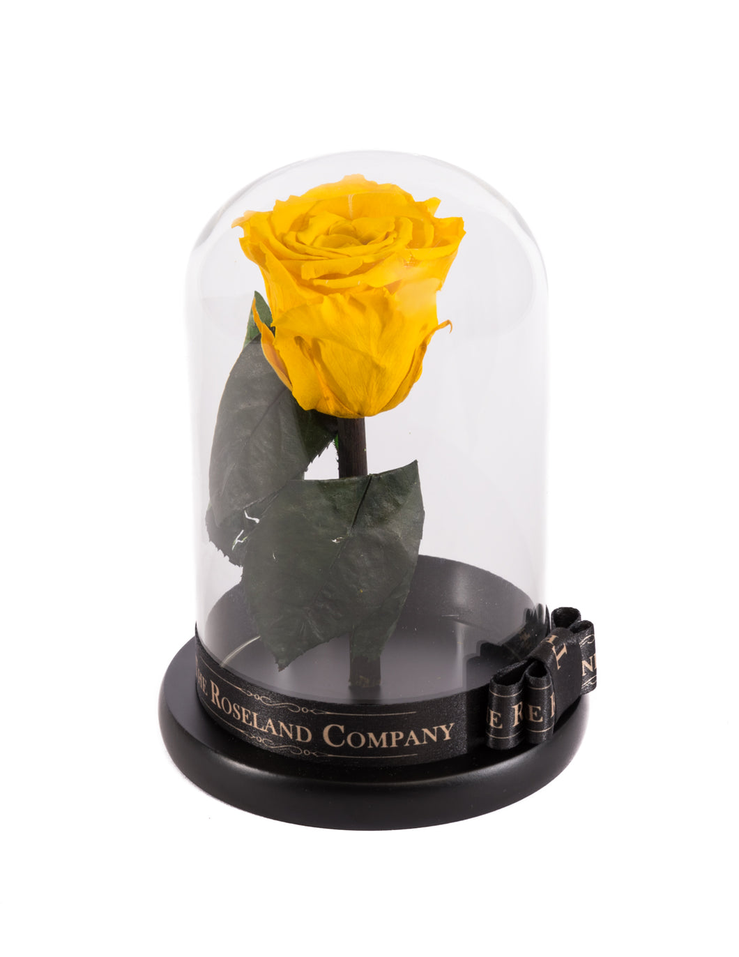 As seen in Beauty and the Beast: Yellow Eternity Rose, Under the Dome