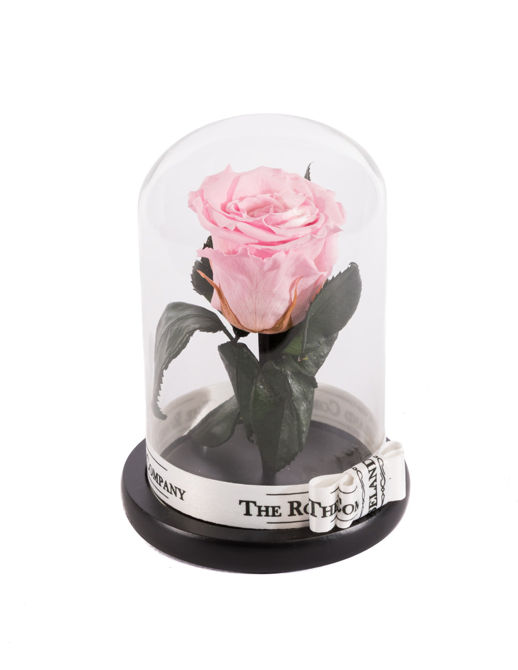 As seen in Beauty and the Beast: PINK Eternity Rose, Under the Dome