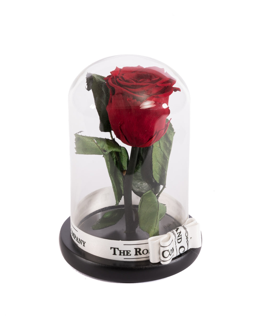 As seen in Beauty and the Beast: RED Eternity Rose, Under the Dome
