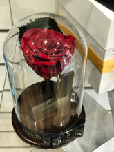Customized the As seen in Beauty and the Beast: Eternity Rose, Under the Dome