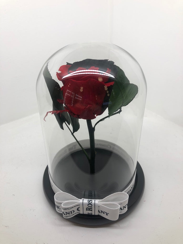 As seen in Beauty and the Beast: Half RED and Half Black Eternity Rose, Under the Dome