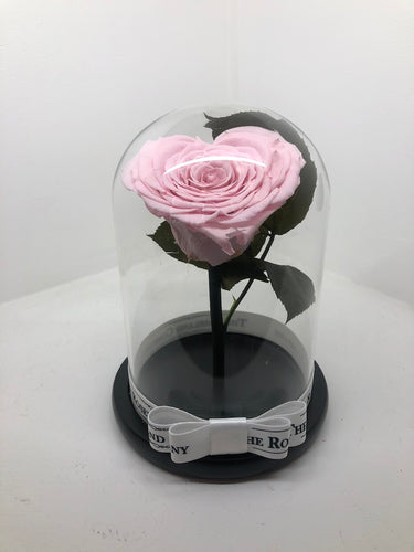 As seen in Beauty and the Beast: Heart Shape PINK Eternity Rose, Under the Dome