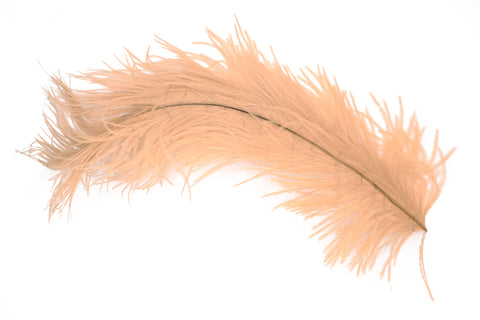 20% off - Ostrich Plume by Rumpf