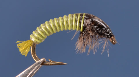 Electric Caddis - Golden Olive and Gray