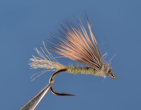 X Caddis - Olive Gray
