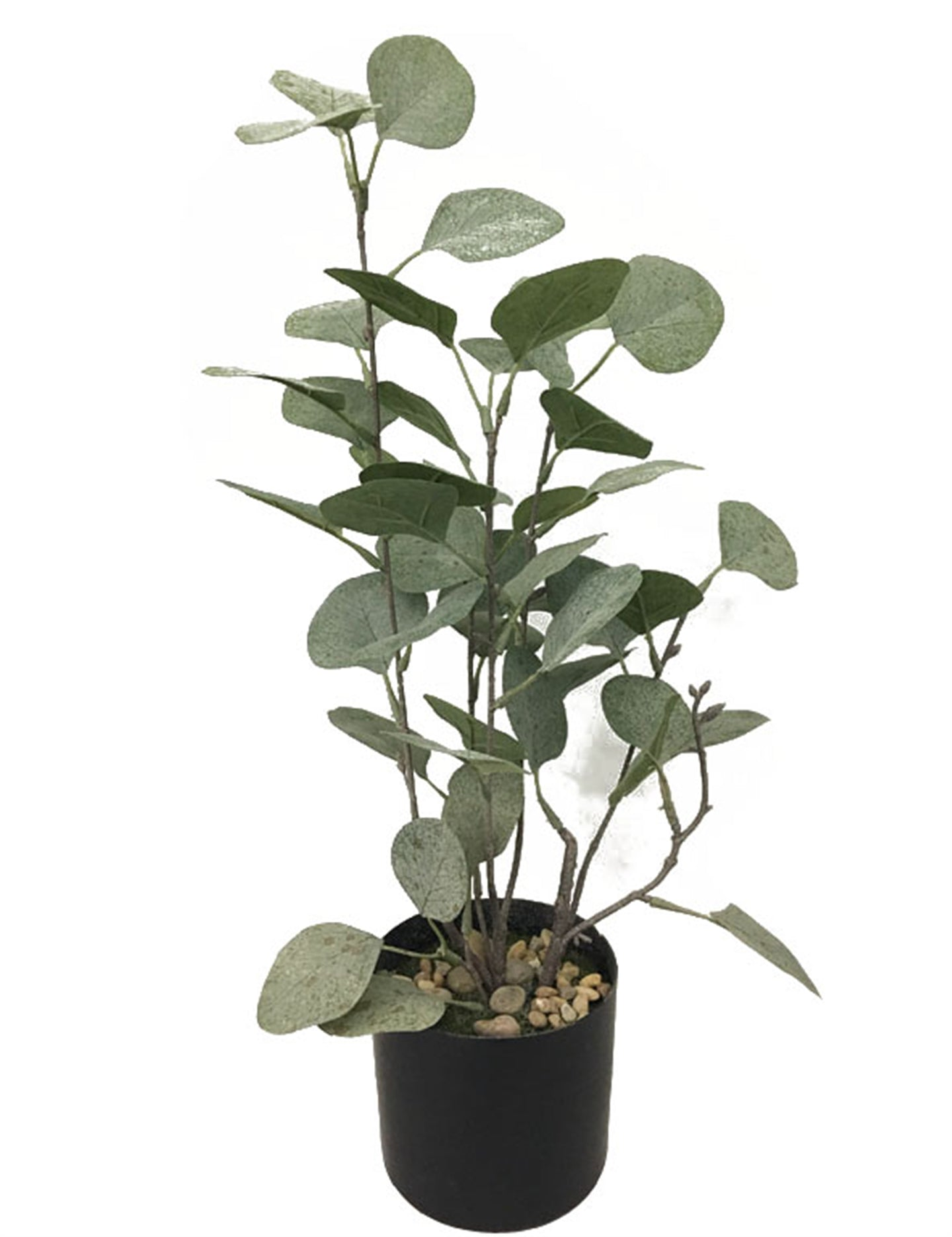 Faux Money Leaf Plant