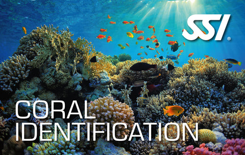 SSI Coral Identification Course