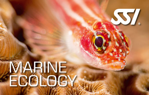 SSI Marine Ecology Course