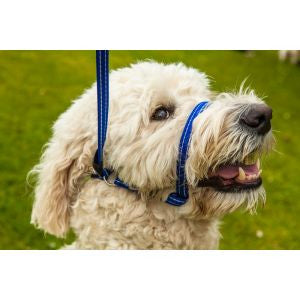 Gencon All-In-One Dog Head Collar - Pet Goodys