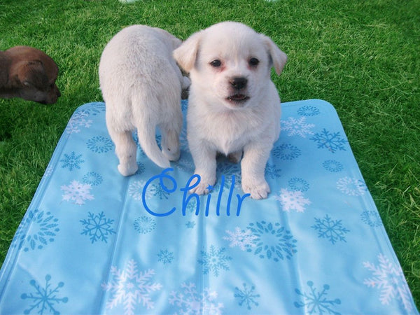Chillr PCM Cooling Pet Mat - Pet Goodys