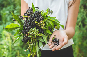 Elderberry Herbal Supplement for Immune System Health