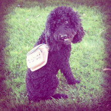 "a black poodle sitting in the grass while wearing a gold iridescent fanny pack that reads ""Fund Abortions. Build Power."""