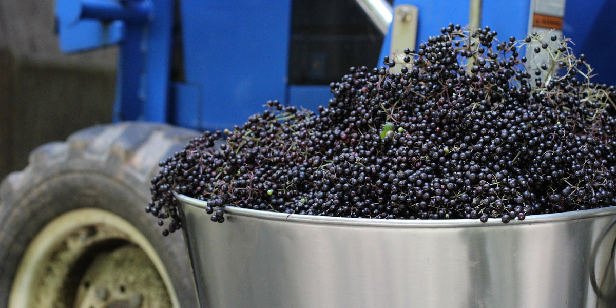 News From Our Elderberry Farms